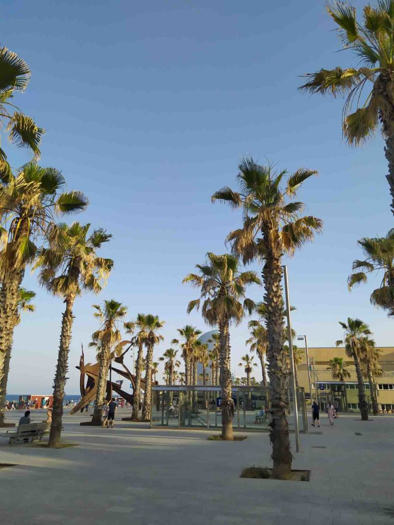 Palme porto di Barcellona