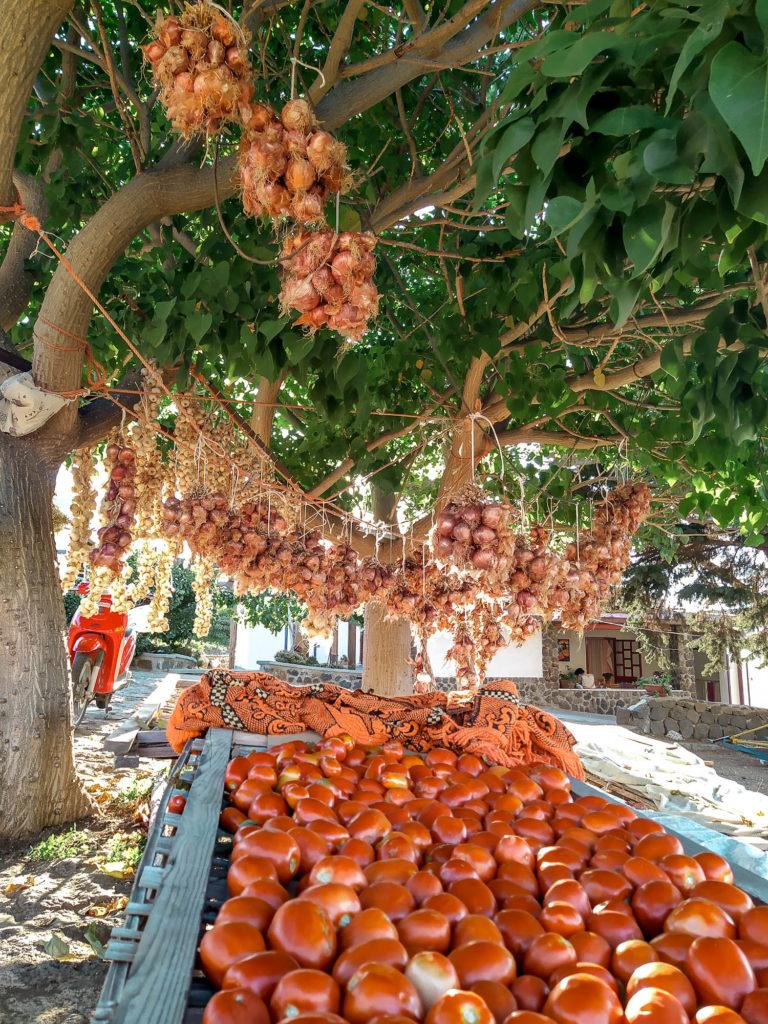 Pomodoro di Ustica