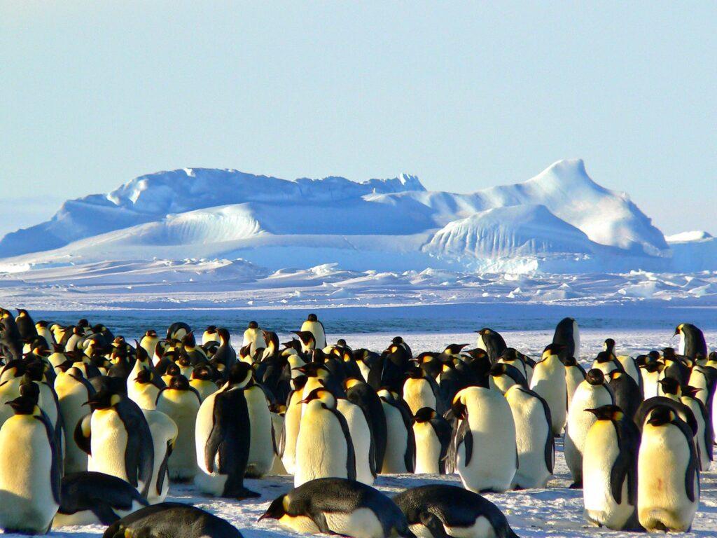 Travel Dreams: Antartide