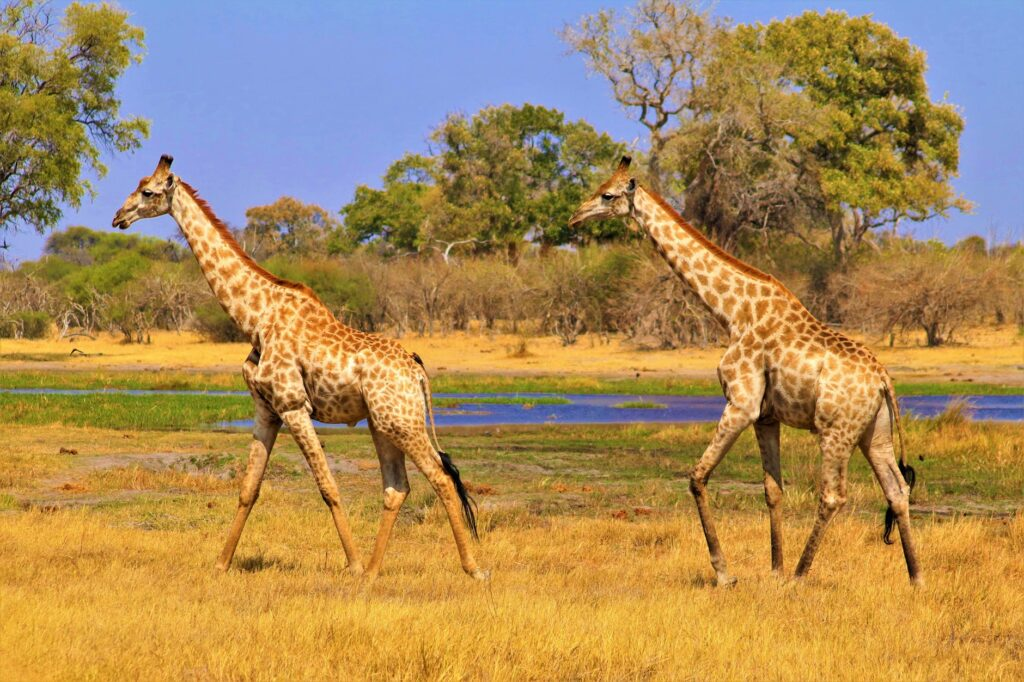 Travel Dreams: Tanzania